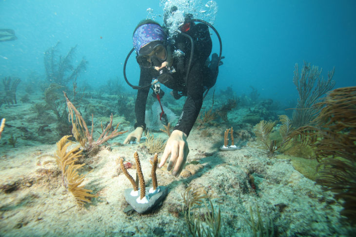 Canon Participates In University Of Miami's Coral Reef Restoration Project